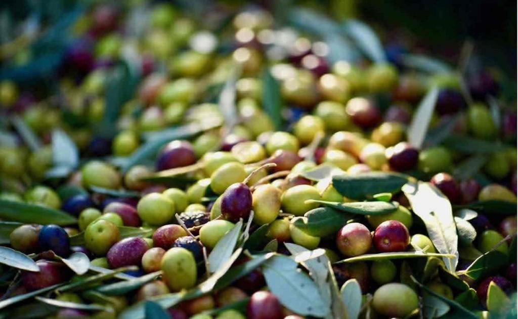 L`olio siciliano. Perchè è il più buono